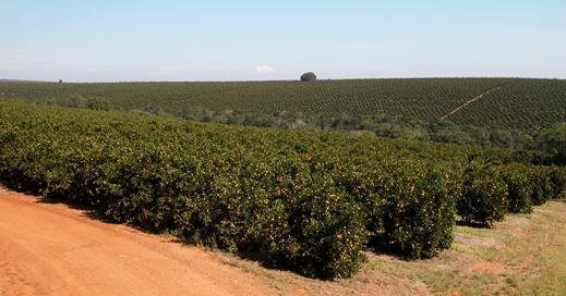 Fazenda de Laranjas 14 Pomar7